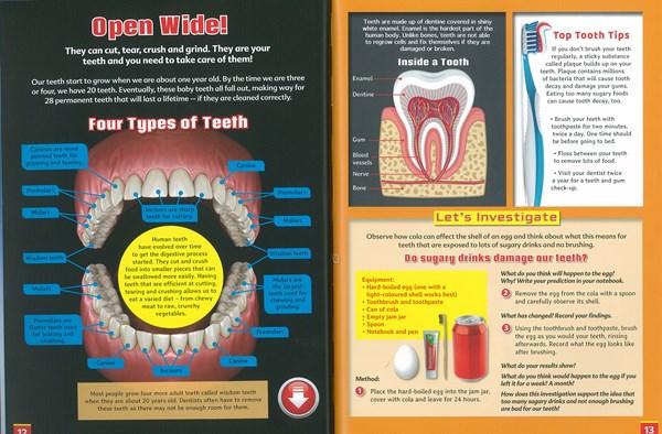 TeethfromTheHumanBody Lioncrest Education - News & Specials